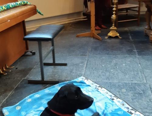 Dierendag in de kerk